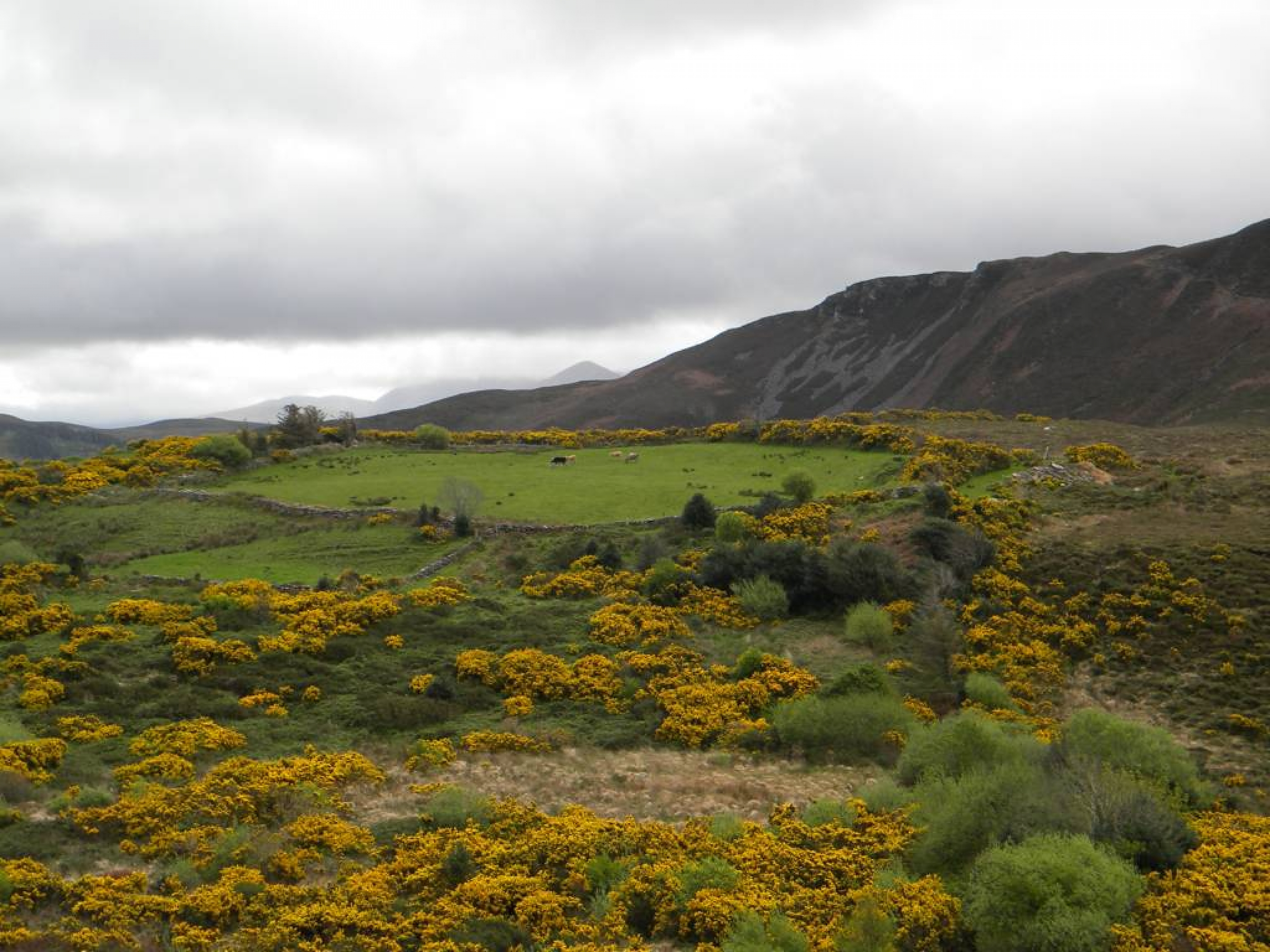 Ring_of_Kerry_(37)